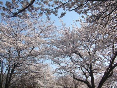 水元公園2009